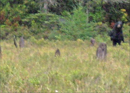 Standing Bear Ontario, Canada