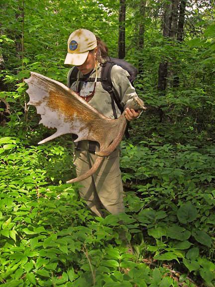 Moose Antler Shed Ontario