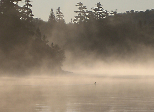 Morning Loon